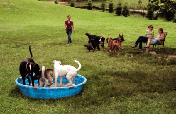 Watauga Humane Society Dog Park