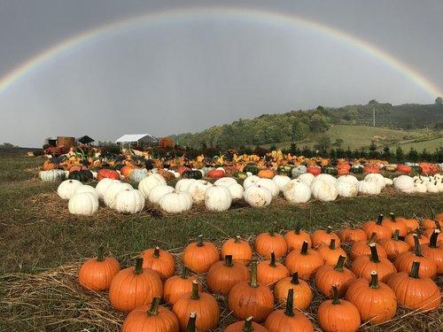 Ashe County Corn Maze
