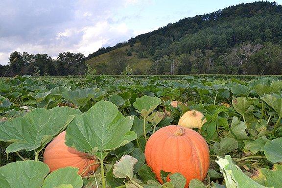 Harvest Farms Corn Maze NC