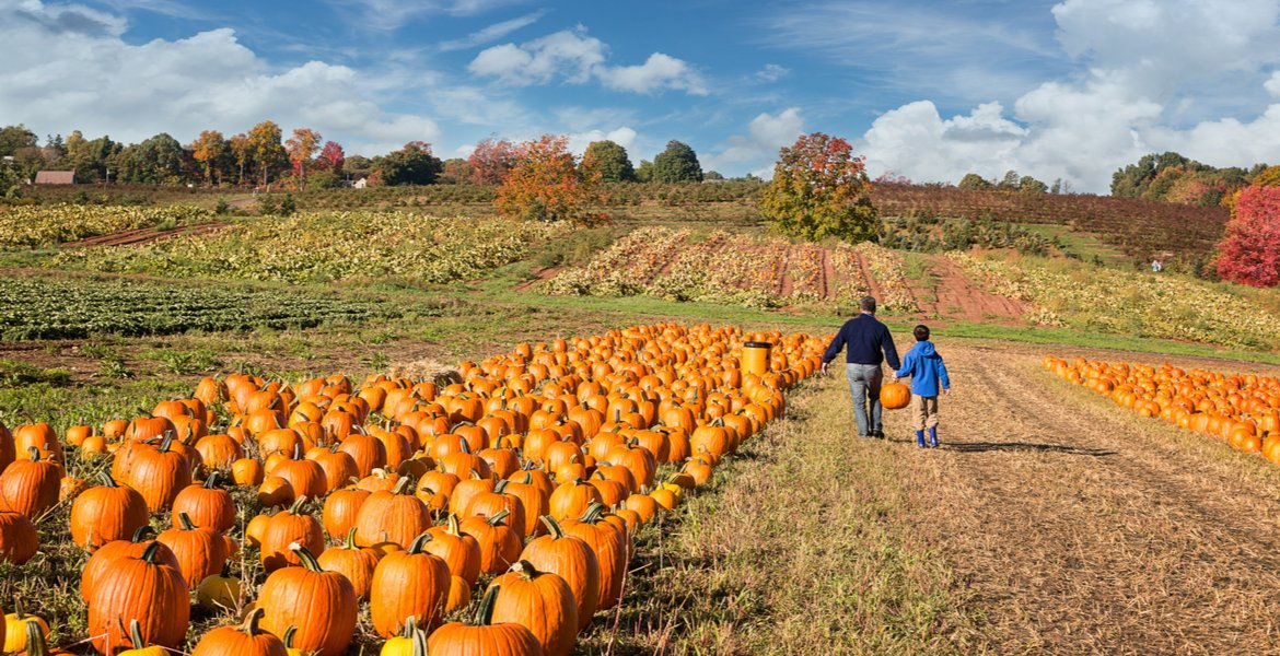 Pumpkin Patches in the High Country NC