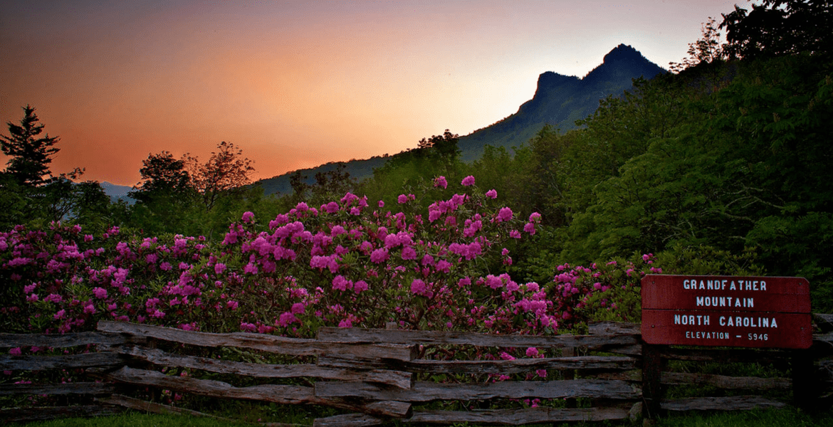 Grandfather Mountain sunset with beautiful flowers